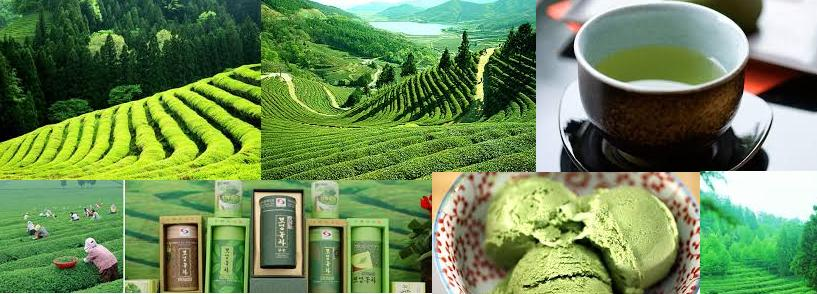 Boseong dawon tea field trip