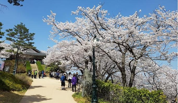 Gyeonpo Lake blossom