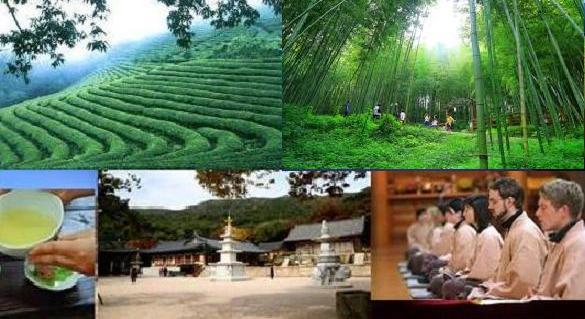 Bamboo forest green tea fields NEW