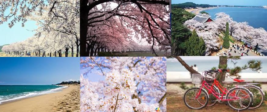 Main pic for april 8 gyeongpo lake